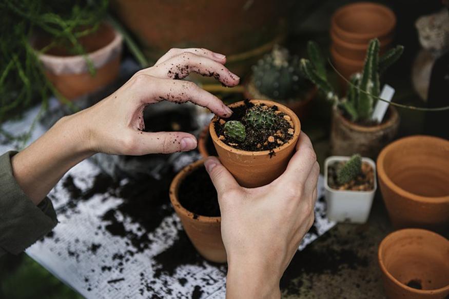 पर्यावरणविद ऐसे कई पौधों की पहचान कर चुके हैं जिन्हें घरों की छत, बालकनी या इनडोर में लगाया जा सकता है.
