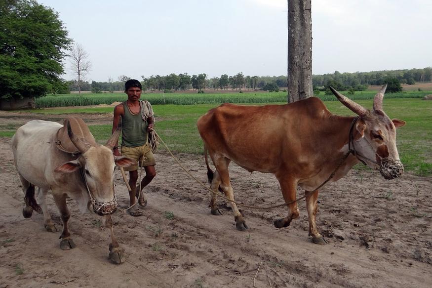 देश में किसानों की हालत कितनी दयनीय ये किसी से छिपी नहीं है. (फोटो: pixabay.com).